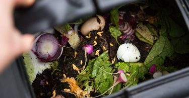 peeking into a black compost bin with eggshells and vegetable waste on the surface