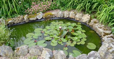 pond in garden with water lilies and surrounding stones