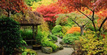 an autumnal japanese garden in canada