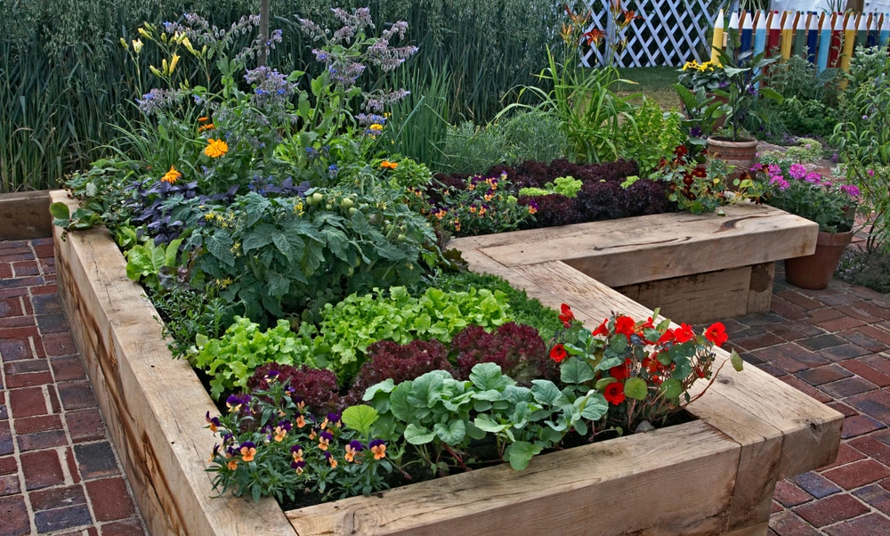 A timber raised vegetable garden with borage, tomatoes, lettuce and pansies