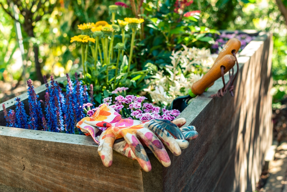 various plants, gardening gloves and a trowel sat in a wooden planter
