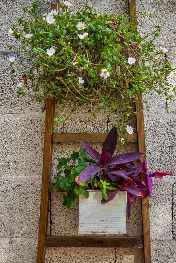 street planter made from a wooden ladder