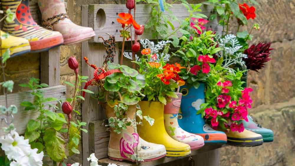 plants growing from painted wellies in Yorkshire, UK