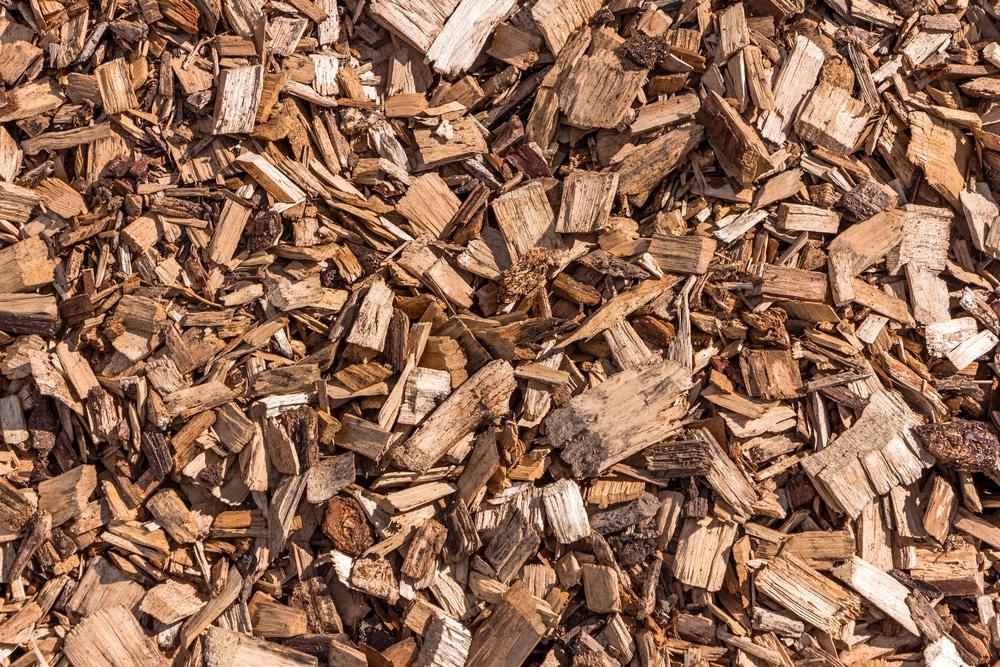 Close up of wooden splinters in garden