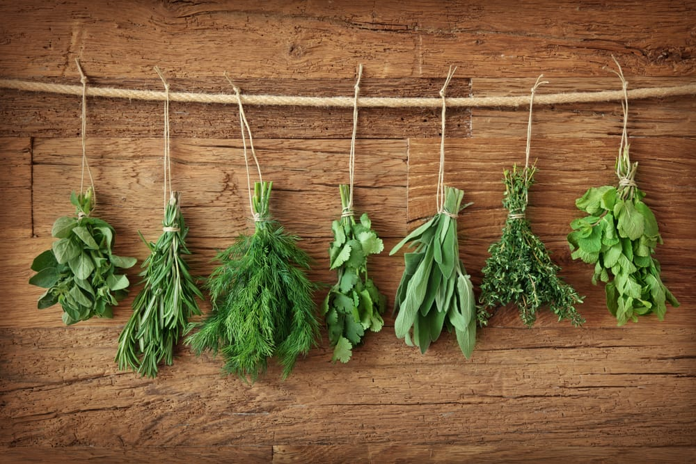 fresh herbs hanging over wooden background