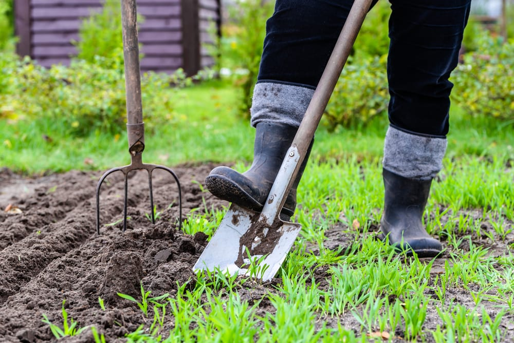 spade being pushed into vegetable patch by gardener