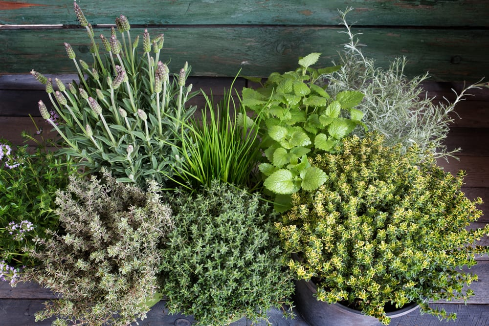 a spice herb garden sat on wooden table