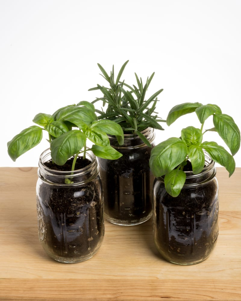 three herb plants in mason jars sat on a wooden table