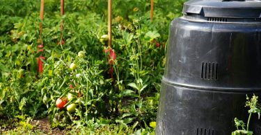 black compost bin sat next to ripe tomatoes in a garden
