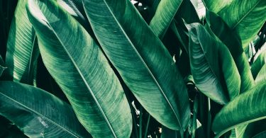 long length tropical foliage