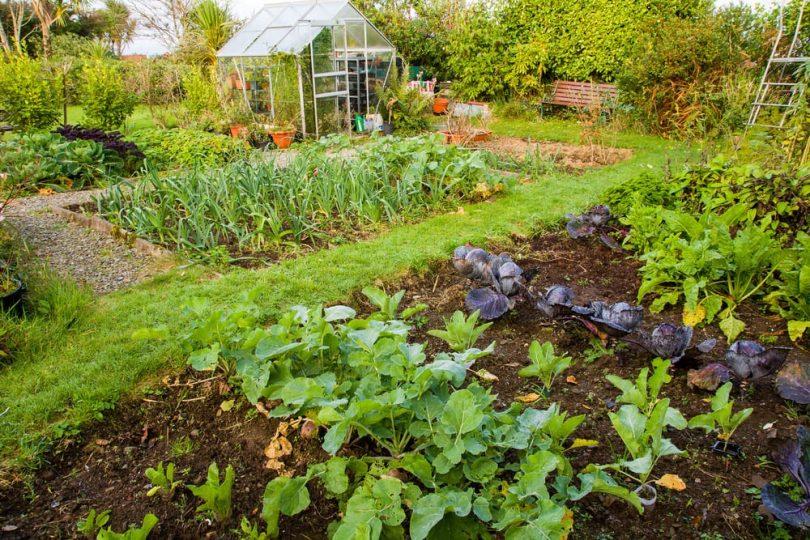 home garden vegetable patch