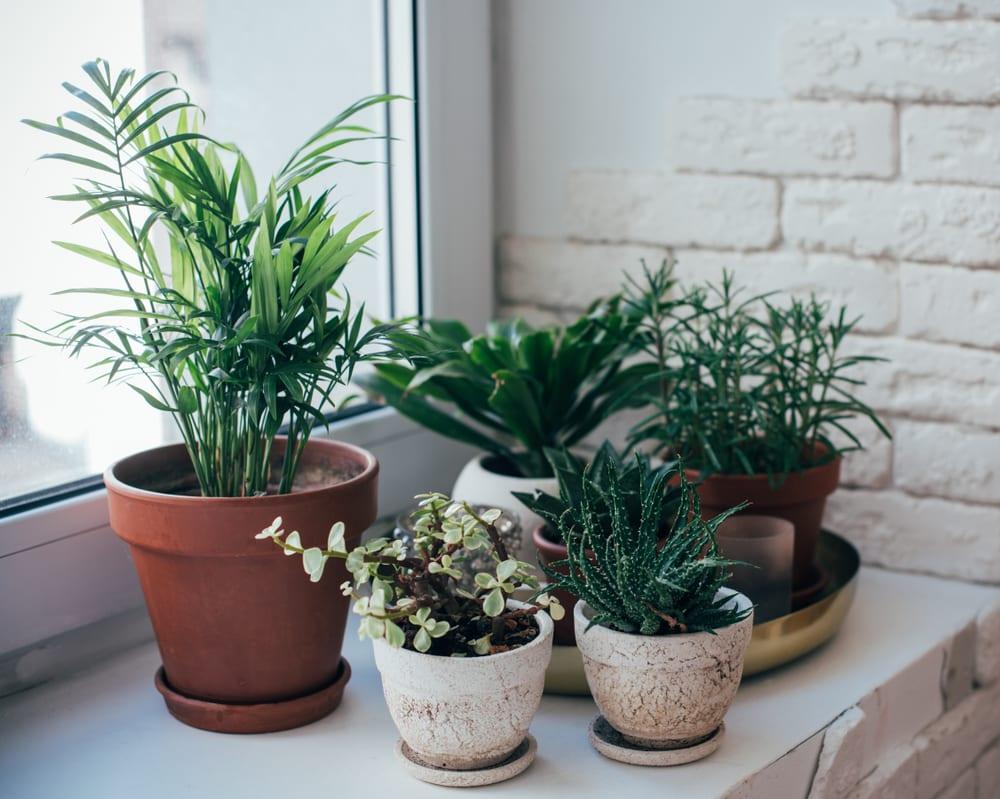 houseplants sat on a windowsill