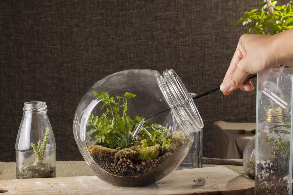 lady using tweezers on home terrarium