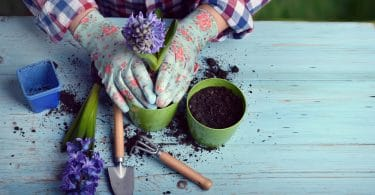 woman planting flowers in pot with soil
