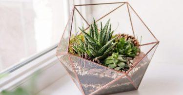 mini succulents in a glass terrarium on a windowsill