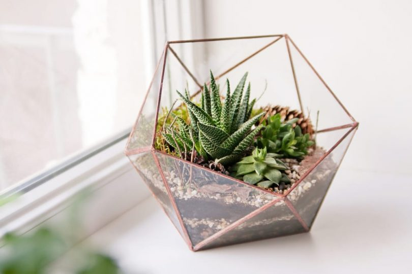 mini succulents in a glass terrarium on a windowsill