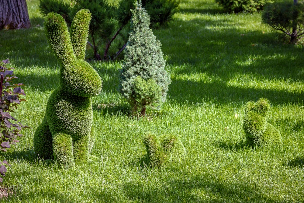 rabbits created from topiary bushes