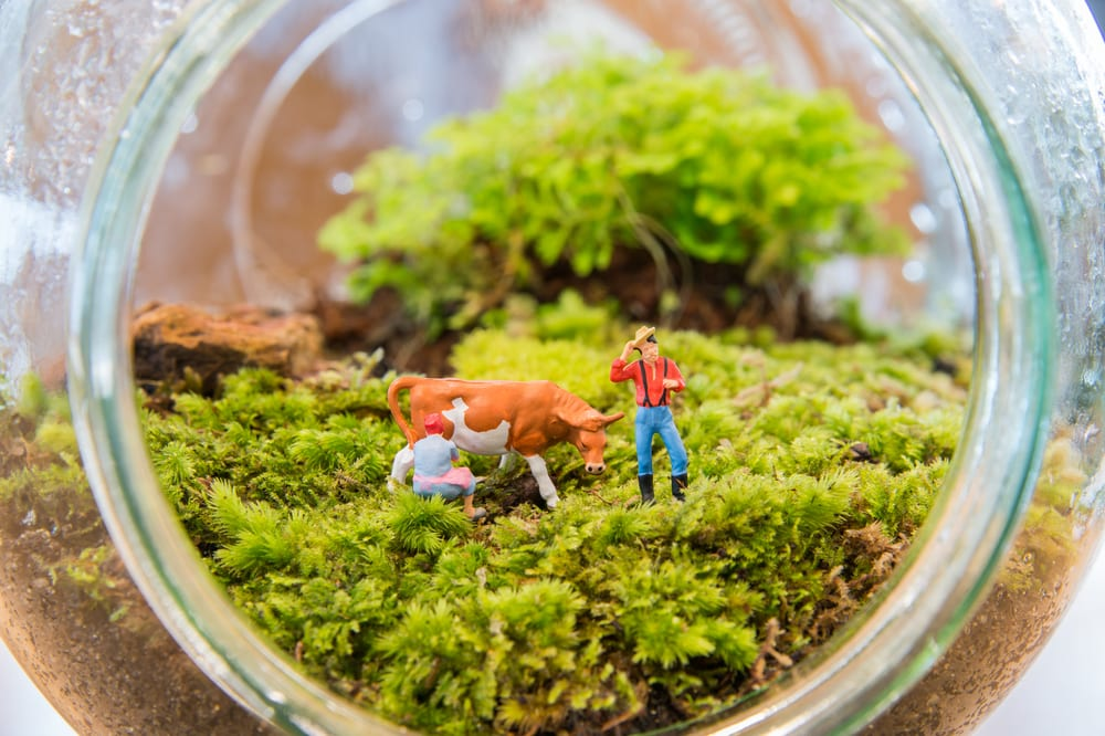 Miniature plastic figures in a Terrarium