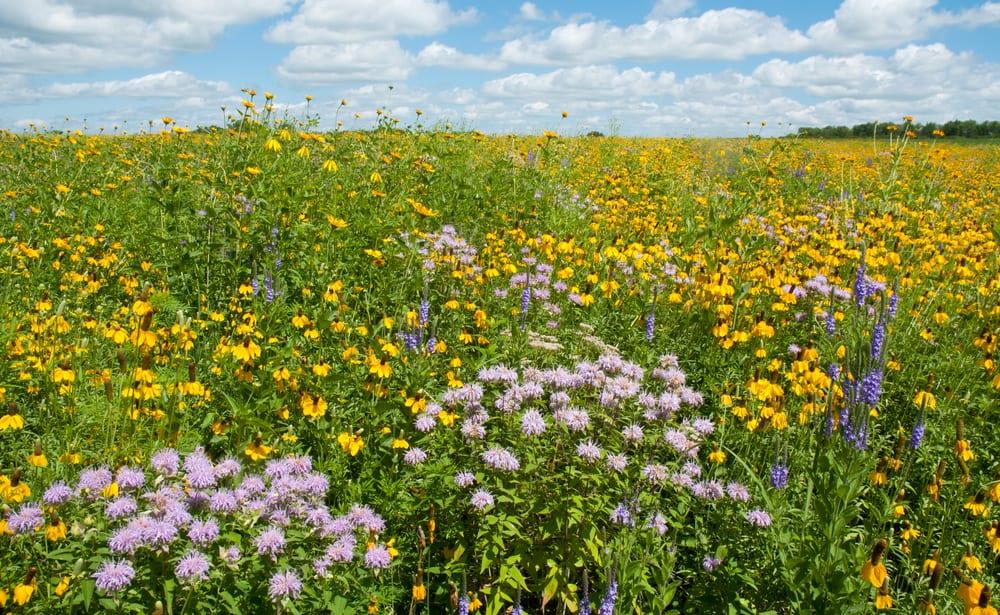 a prairie full of flowers