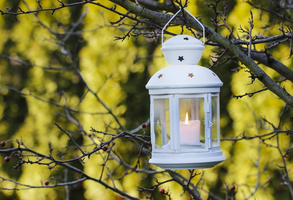 white lantern hanging from branches