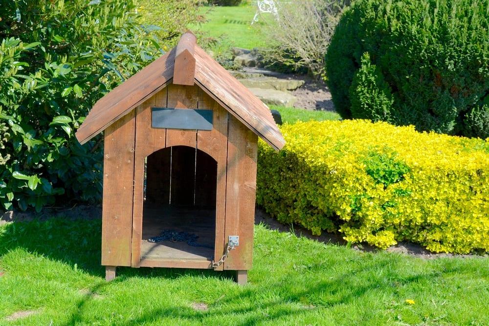 an empty kennel sat in a garden